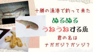 十勝の漁港でぬるぬるする変な魚を釣って来た話