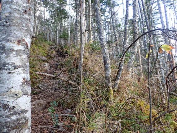 十勝・鹿追の然別湖でナキウサギを見られると聞いたので白雲山・天望山を縦走してみた