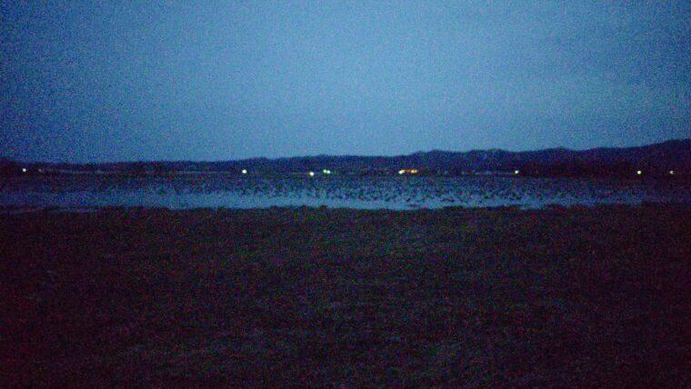 【日常とかけ離れた景色】北海道・美唄市にある宮島沼でマガンのねぐら立ちを見てきた話。